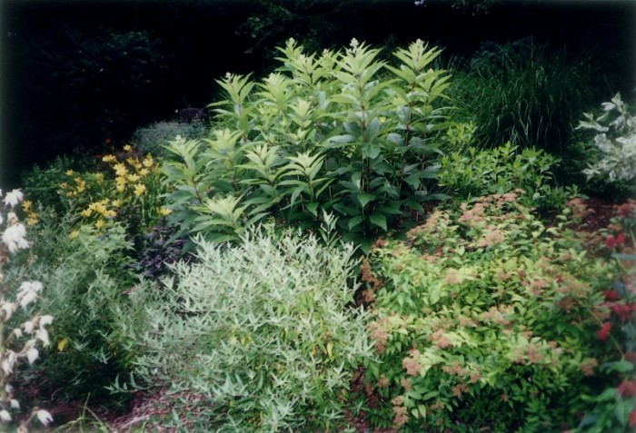 Landscaping Ideas - Hillside Perennial Garden in Wynnewood