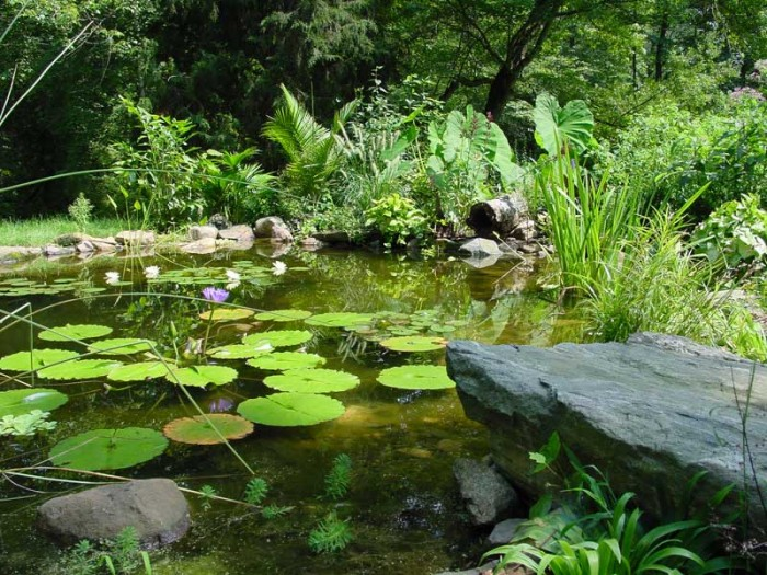 Pond with stream and waterfall in Newtown Square