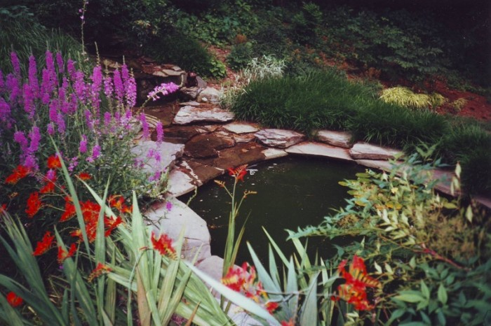 Water garden in Radnor