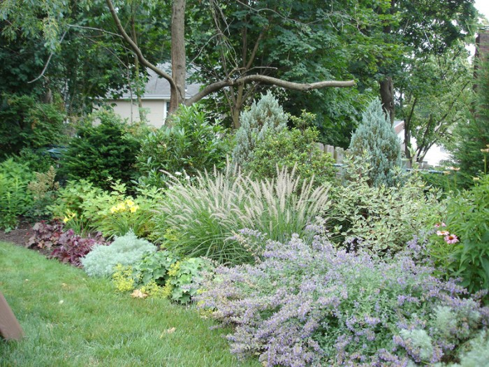 Backyard Designs - Privacy Screen Using Shrubs and Perennials in Frazer - After